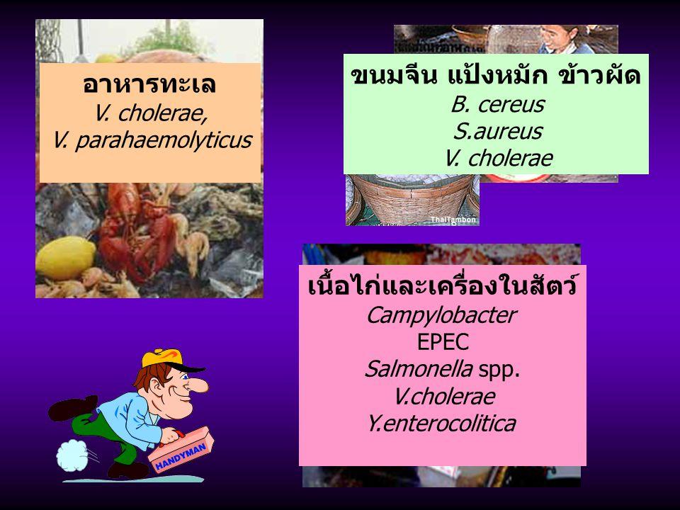 ขนมจีน แป้งหมัก ข้าวผัด เนื้อไก่และเครื่องในสัตว์