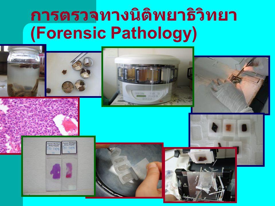 การตรวจทางนิติพยาธิวิทยา (Forensic Pathology)