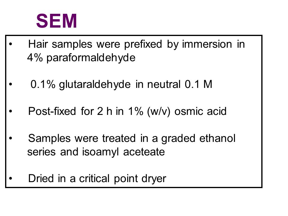 SEM Hair samples were prefixed by immersion in 4% paraformaldehyde