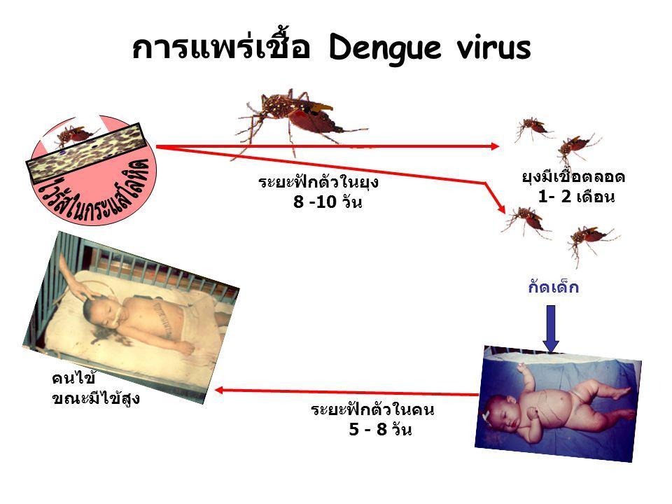 การแพร่เชื้อ Dengue virus