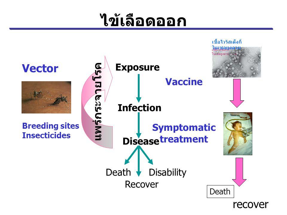 ไข้เลือดออก Vector แพร่กระจายโรค recover Exposure Infection Disease