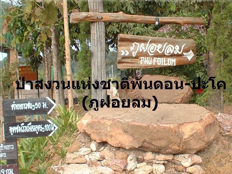 ป่าสงวนแห่งชาติพันดอน-ปะโค (ภูฝอยลม)