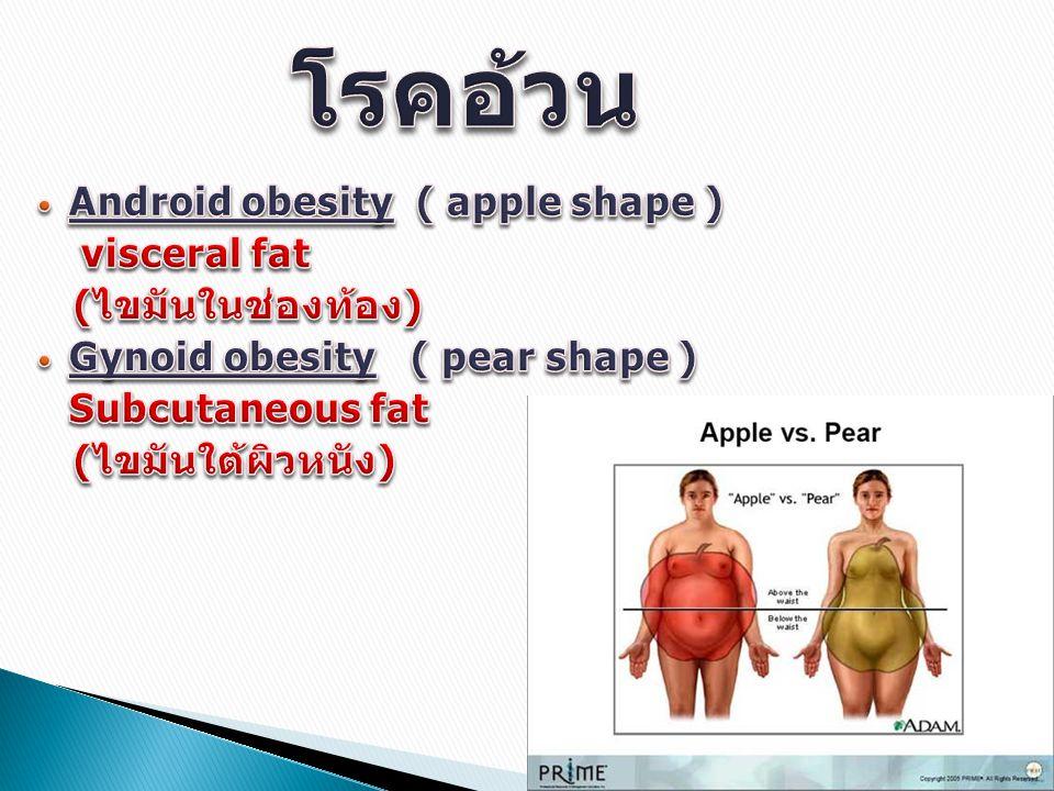 โรคอ้วน Android obesity ( apple shape ) visceral fat (ไขมันในช่องท้อง)
