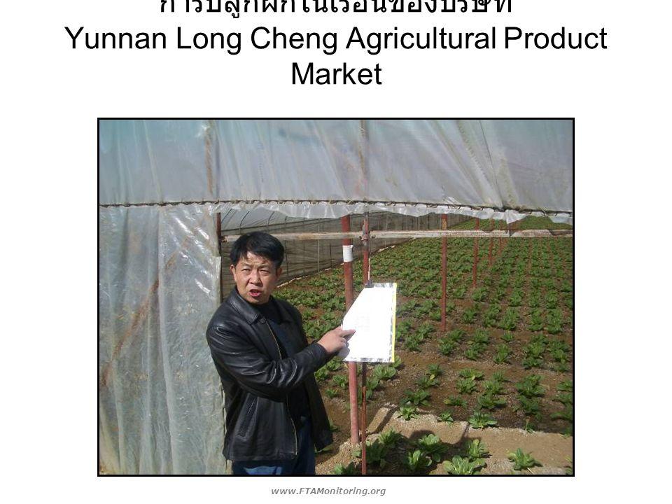 การปลูกผักในเรือนของบริษัท Yunnan Long Cheng Agricultural Product Market