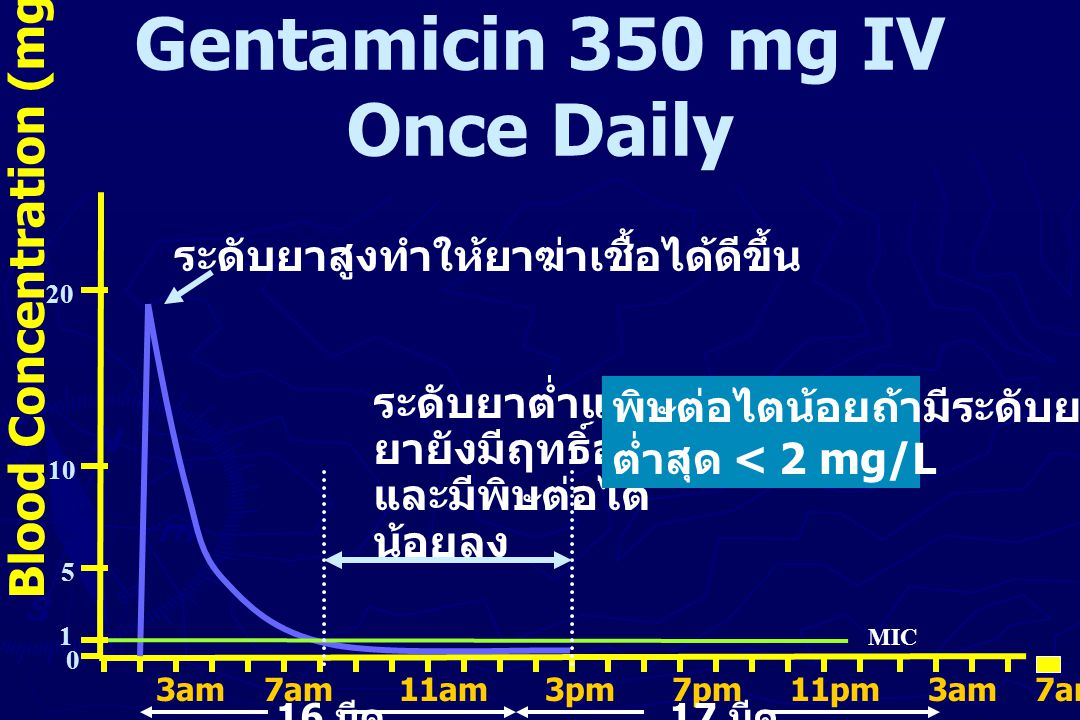 Gentamicin 350 mg IV Once Daily