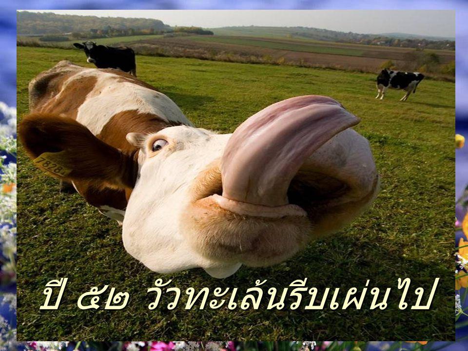 ปี ๕๒ วัวทะเล้นรีบเผ่นไป