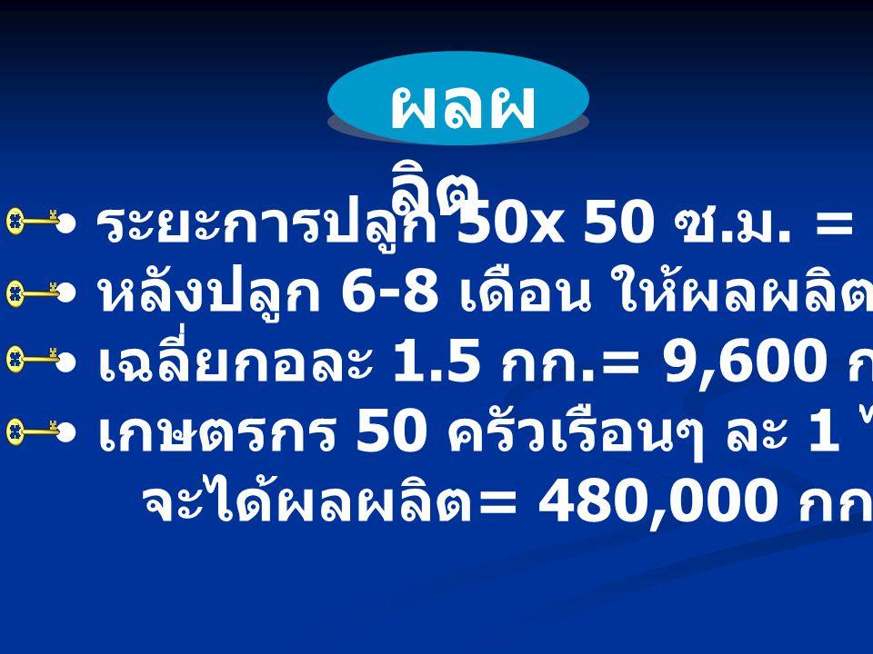 ผลผลิต ระยะการปลูก 50x 50 ซ.ม. = 6,400 กอ/ไร่