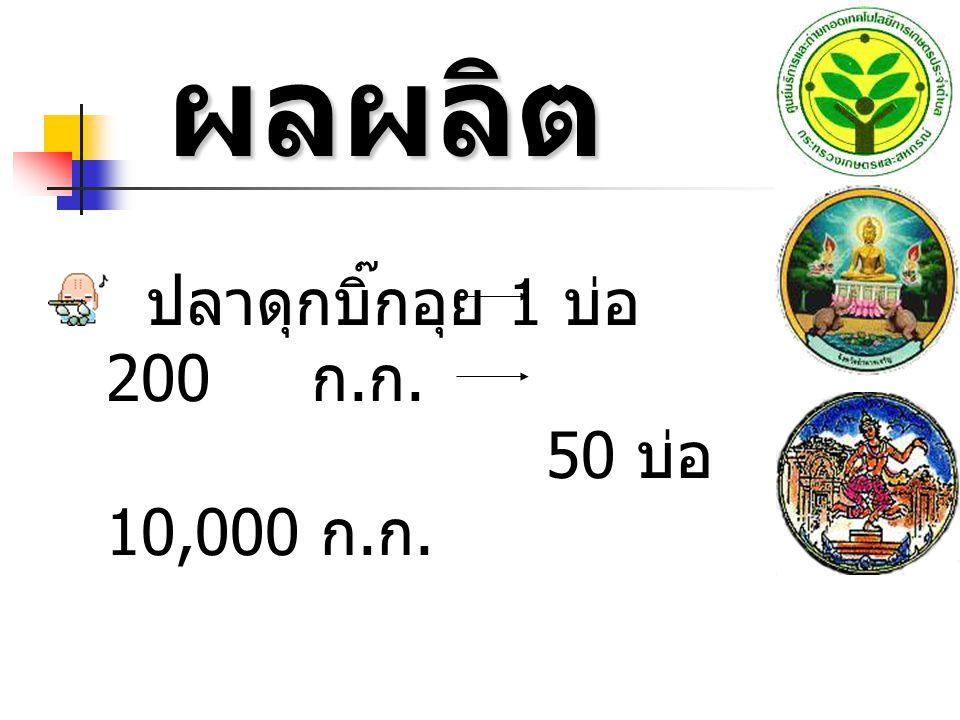 ผลผลิต ปลาดุกบิ๊กอุย 1 บ่อ 200 ก.ก. 50 บ่อ 10,000 ก.ก.