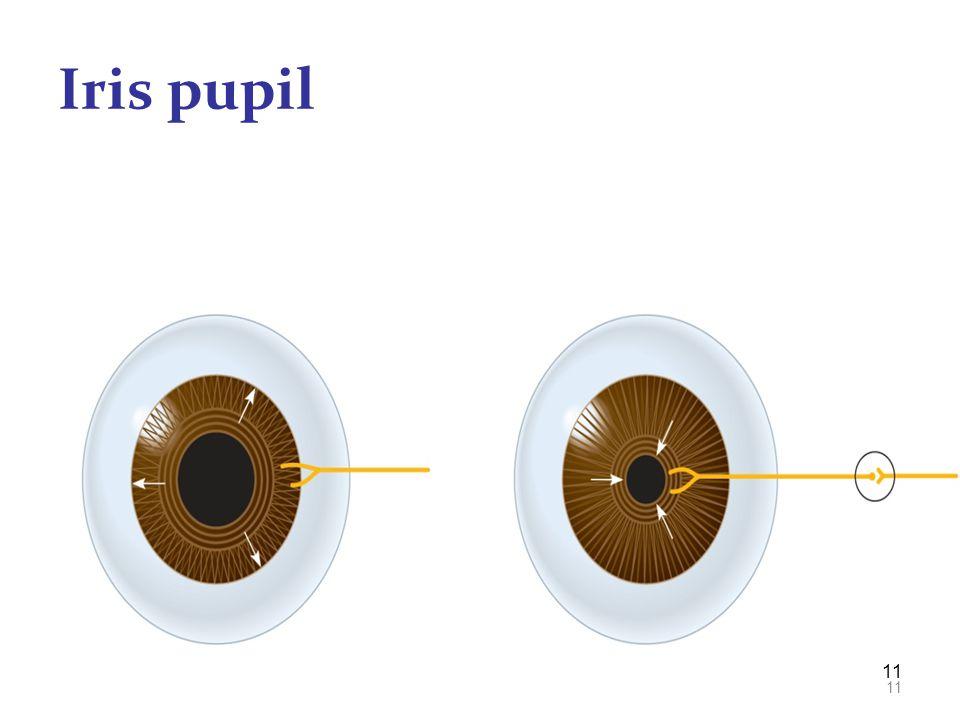 Iris pupil 11