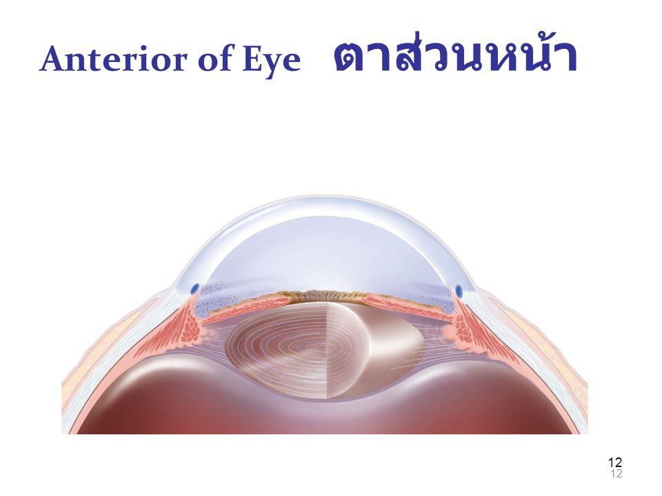 Anterior of Eye ตาส่วนหน้า
