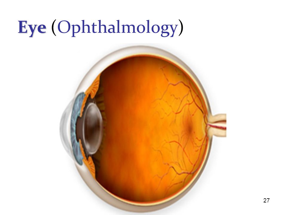 Eye (Ophthalmology)