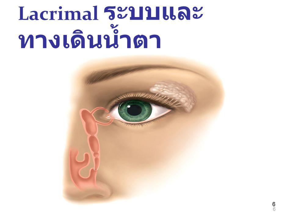 Lacrimal ระบบและทางเดินน้ำตา