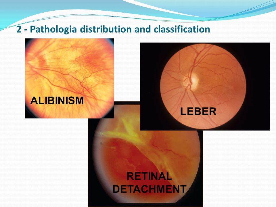 2 - Pathologia distribution and classification