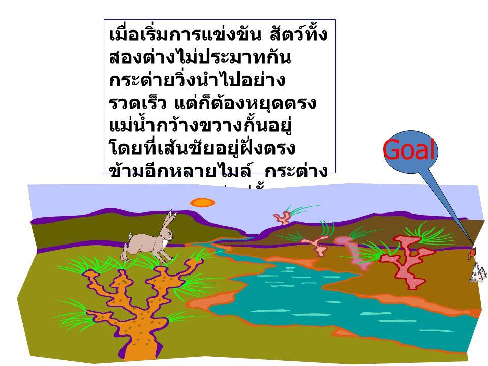 เมื่อเริ่มการแข่งขัน สัตว์ทั้งสองต่างไม่ประมาทกัน กระต่ายวิ่งนำไปอย่างรวดเร็ว แต่ก็ต้องหยุดตรงแม่น้ำกว้างขวางกั้นอยู่ โดยที่เส้นชัยอยู่ฝั่งตรงข้ามอีกหลายไมล์ กระต่างจึงต้องหยุดอยู่แค่นั้นหาหนทางข้ามไปไม่ได้