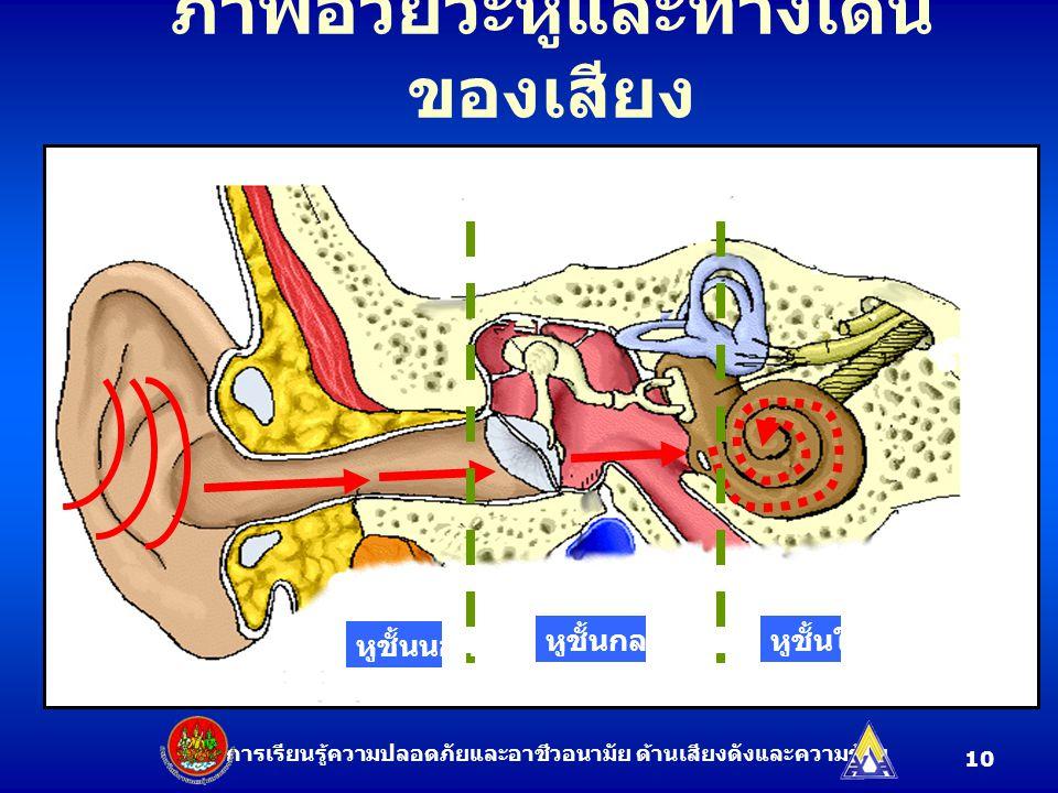 ภาพอวัยวะหูและทางเดินของเสียง