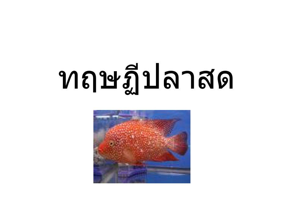 ทฤษฏีปลาสด