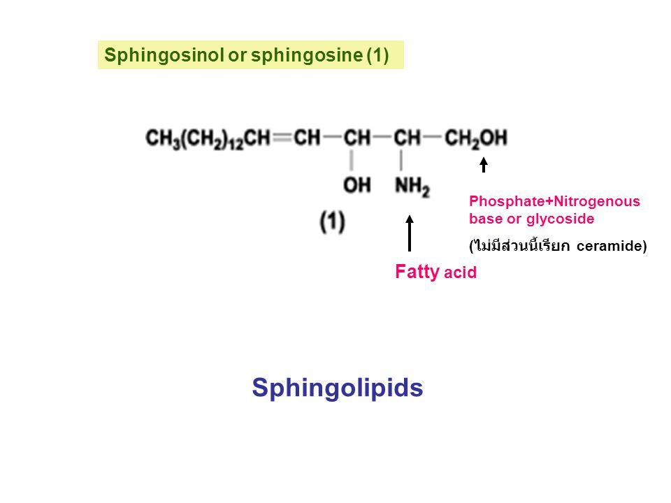 Sphingolipids Sphingosinol or sphingosine (1) Fatty acid