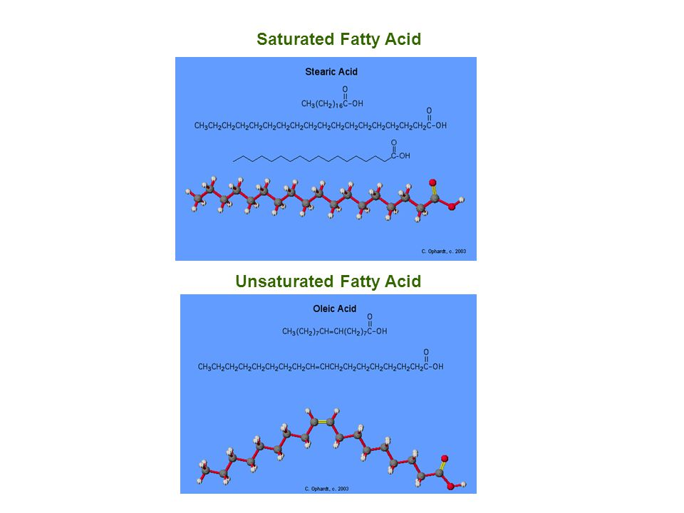Unsaturated Fatty Acid