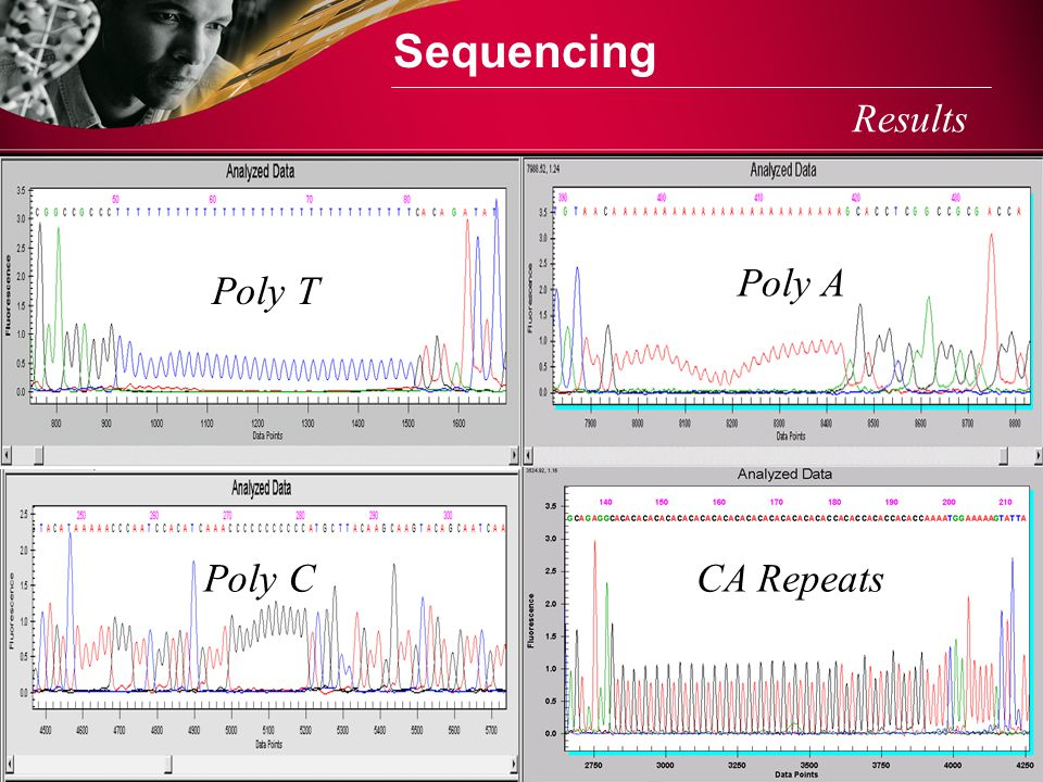 Sequencing Results Poly A Poly T Poly C CA Repeats