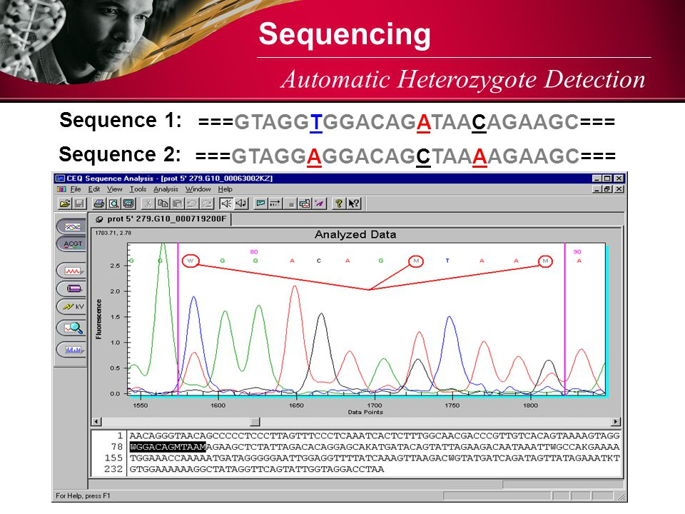 Sequencing Automatic Heterozygote Detection Sequence 1: