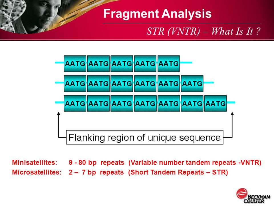 Fragment Analysis STR (VNTR) – What Is It