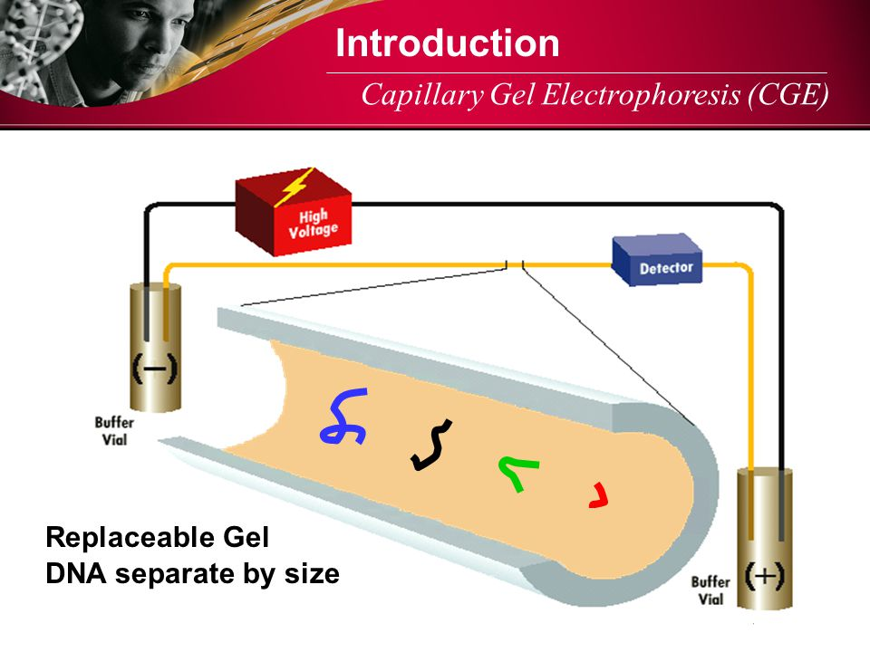 Introduction Capillary Gel Electrophoresis (CGE) Replaceable Gel