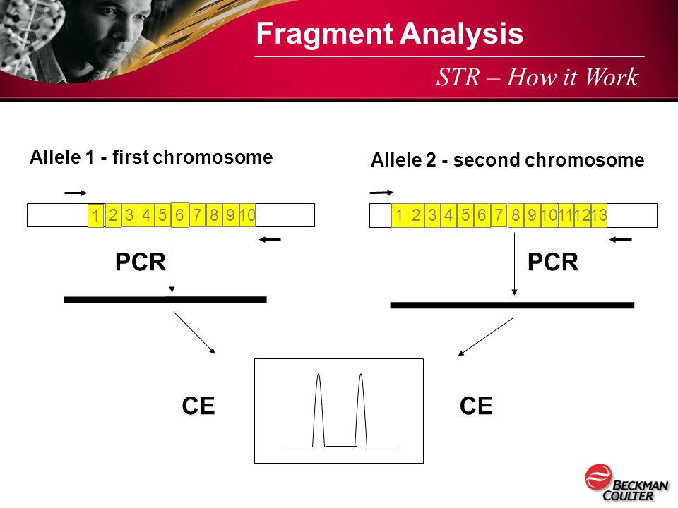 Fragment Analysis STR – How it Work PCR PCR CE CE