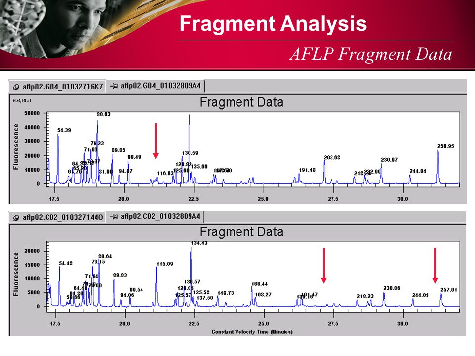 Fragment Analysis AFLP Fragment Data