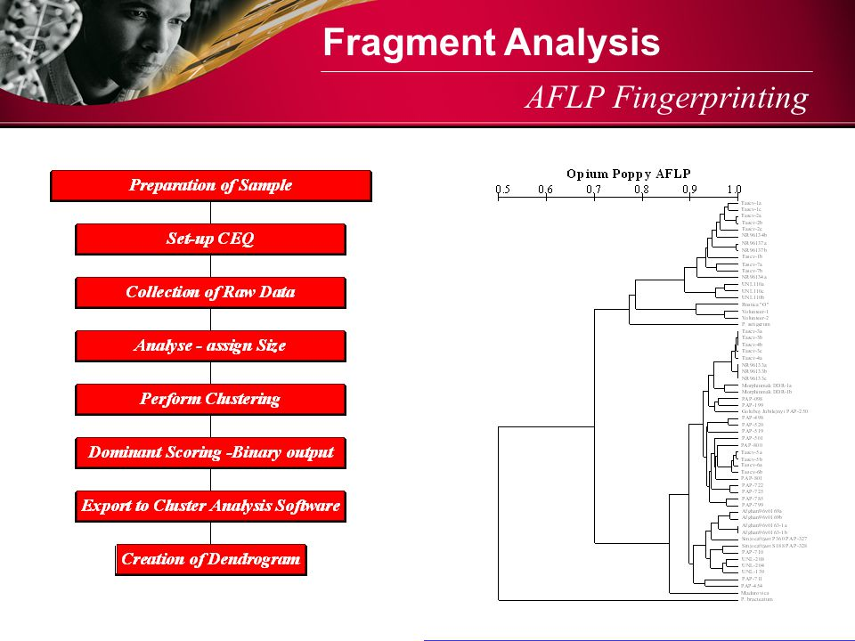 Fragment Analysis AFLP Fingerprinting