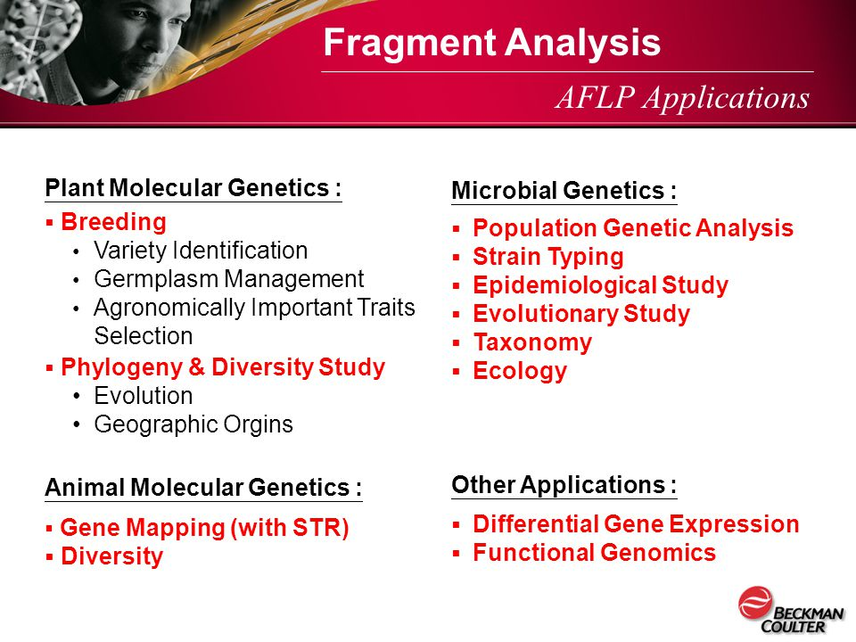 Fragment Analysis AFLP Applications Plant Molecular Genetics :