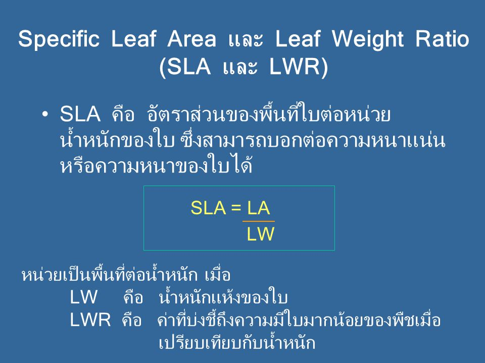 Specific Leaf Area และ Leaf Weight Ratio (SLA และ LWR)