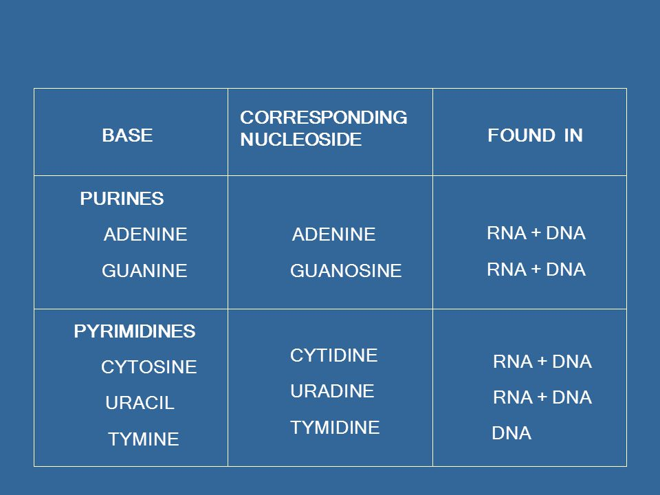BASE CORRESPONDING. NUCLEOSIDE. FOUND IN. PURINES. ADENINE. GUANINE. GUANOSINE. RNA + DNA. PYRIMIDINES.