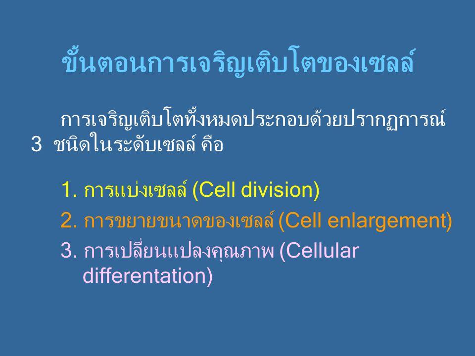ขั้นตอนการเจริญเติบโตของเซลล์