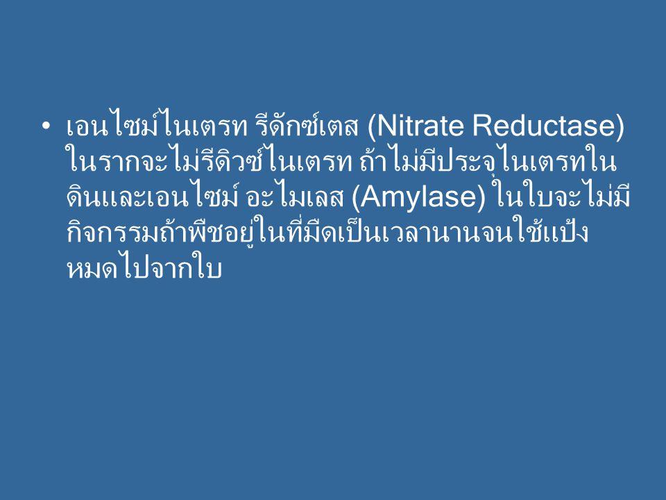 เอนไซม์ไนเตรท รีดักซ์เตส (Nitrate Reductase) ในรากจะไม่รีดิวซ์ไนเตรท ถ้าไม่มีประจุไนเตรทในดินและเอนไซม์ อะไมเลส (Amylase) ในใบจะไม่มีกิจกรรมถ้าพืชอยู่ในที่มืดเป็นเวลานานจนใช้แป้งหมดไปจากใบ