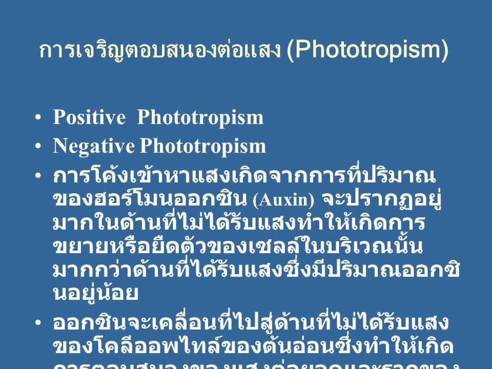 การเจริญตอบสนองต่อแสง (Phototropism)