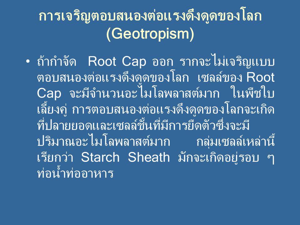 การเจริญตอบสนองต่อแรงดึงดูดของโลก (Geotropism)