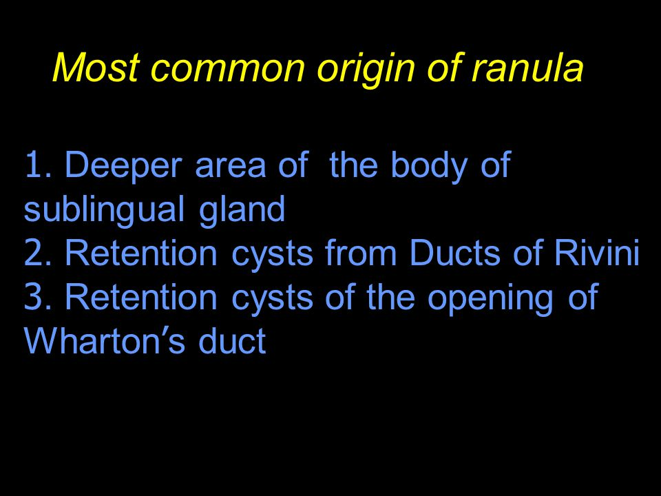 Most common origin of ranula