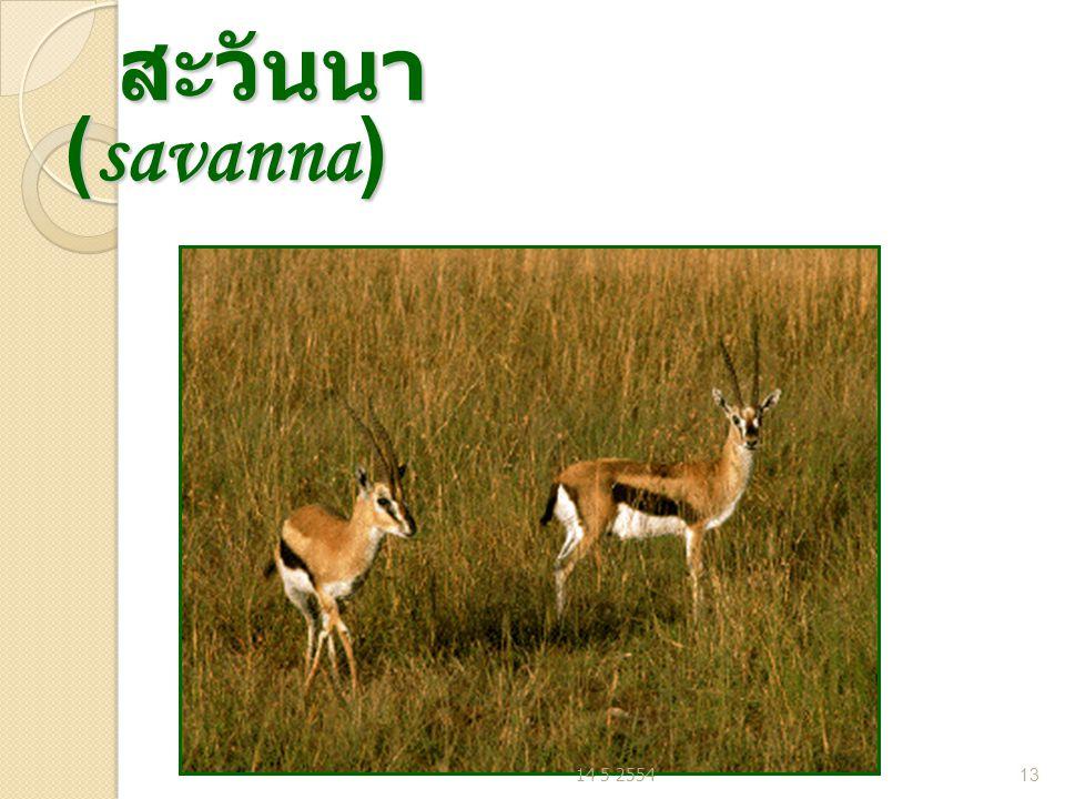 สะวันนา (savanna) 14 5 2554