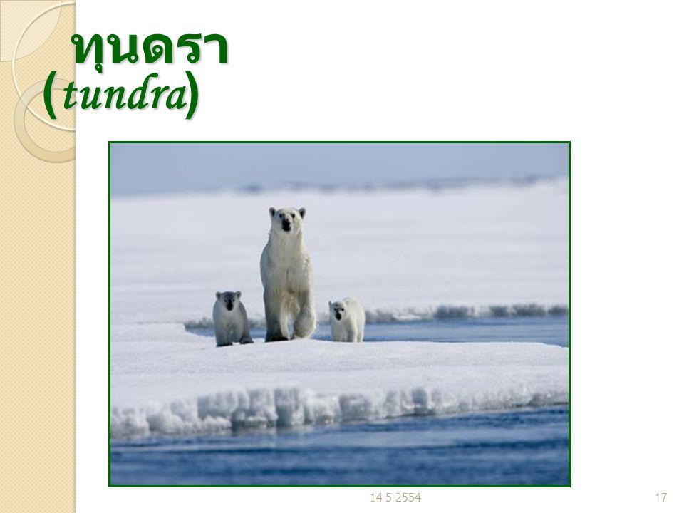 ทุนดรา (tundra) 14 5 2554