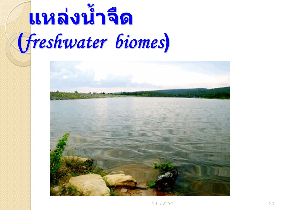 แหล่งน้ำจืด (freshwater biomes)