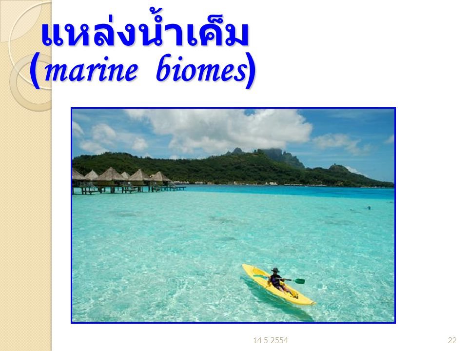 แหล่งน้ำเค็ม (marine biomes)