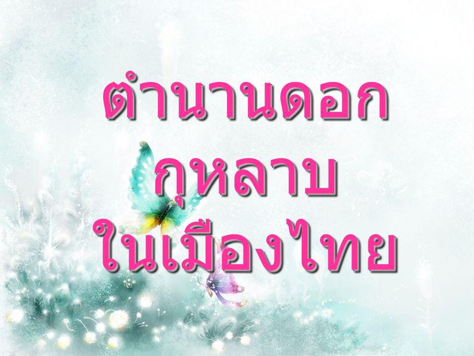 ตำนานดอกกุหลาบ ในเมืองไทย