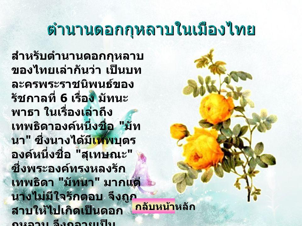 ตำนานดอกกุหลาบในเมืองไทย