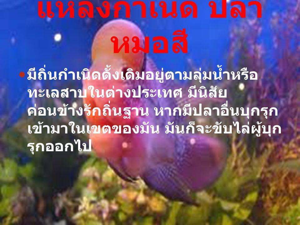 แหล่งกำเนิด ปลาหมอสี