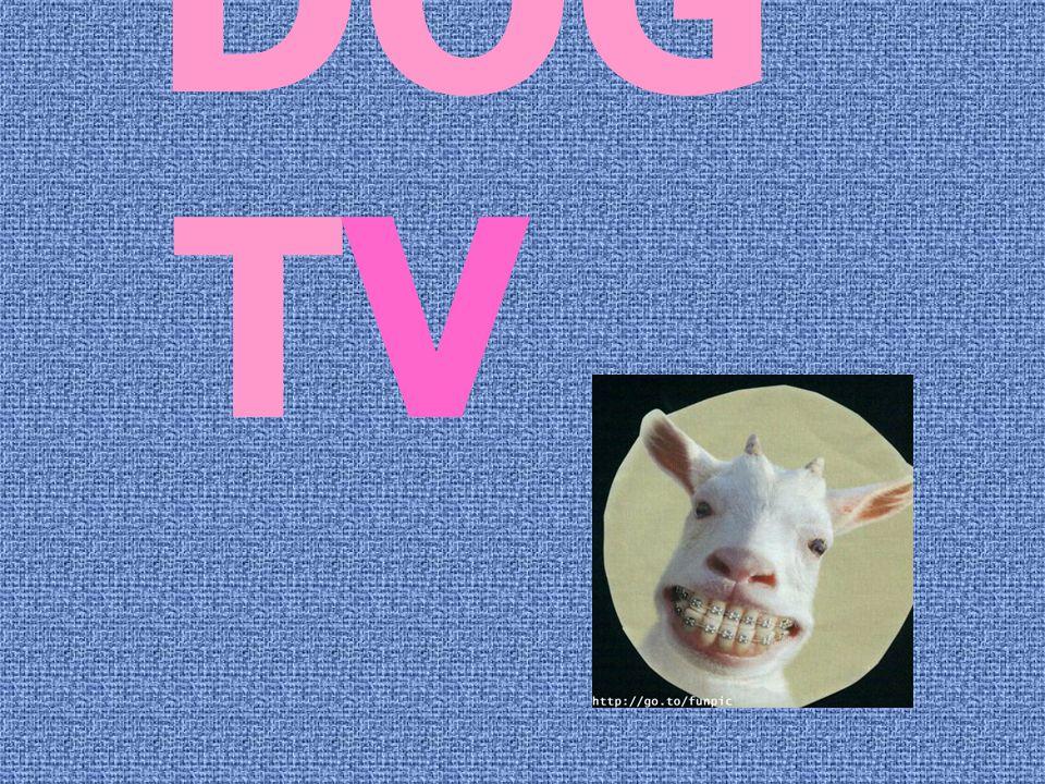 DOG TV ..