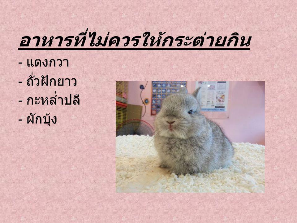 อาหารที่ไม่ควรให้กระต่ายกิน