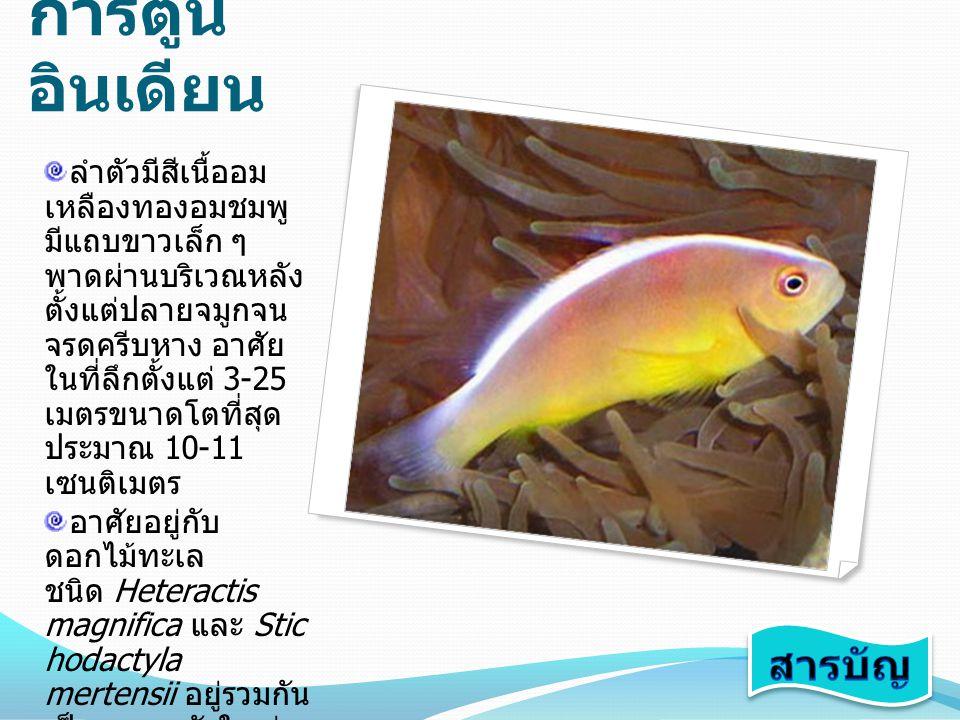 ปลาการ์ตูนอินเดียน สารบัญ