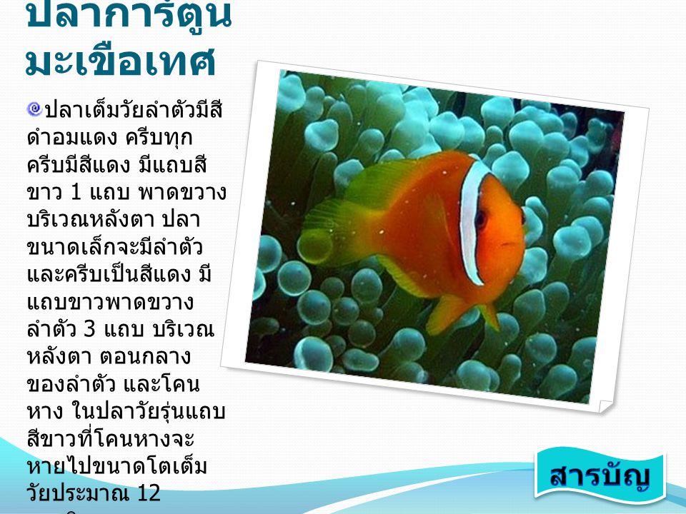 ปลาการ์ตูนมะเขือเทศ สารบัญ