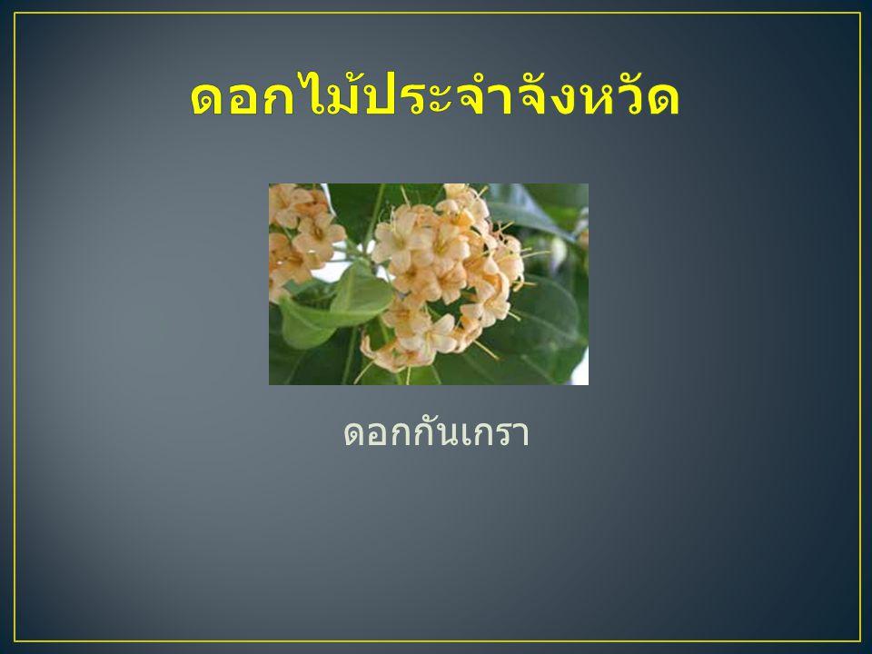 ดอกไม้ประจำจังหวัด ดอกกันเกรา