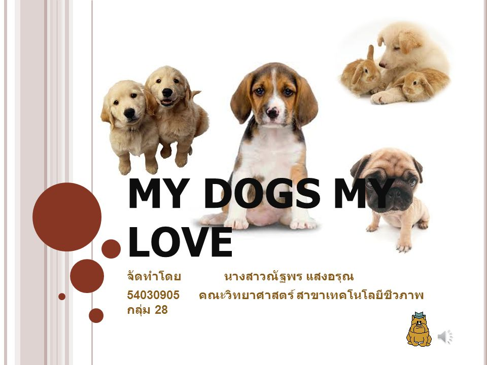 MY DOGS MY LOVE จัดทำโดย นางสาวณัฐพร แสงอรุณ